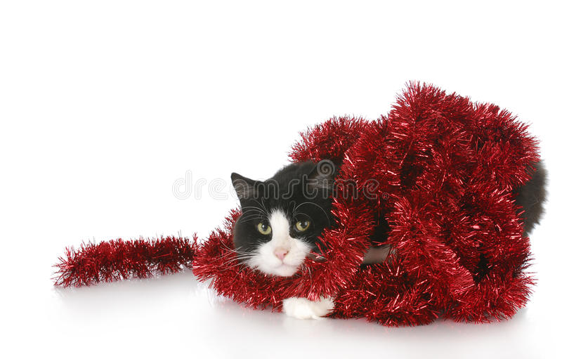 Cat tangled in red garland