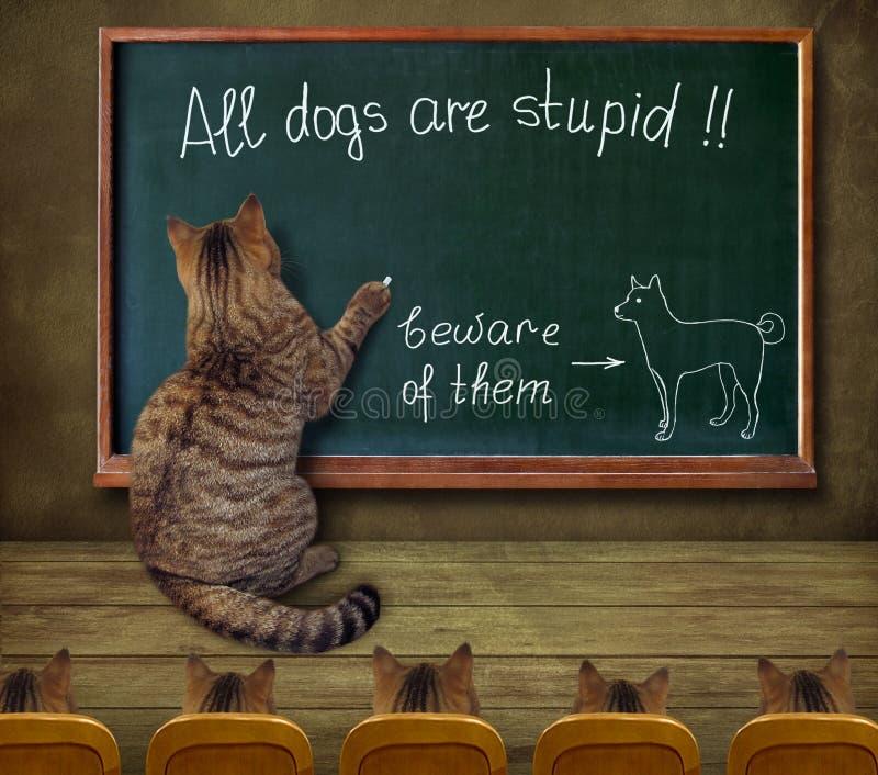 Cat teacher writes on a blackboard. The cat teacher wrote on a blackboard `All dogs are stupid vector illustration