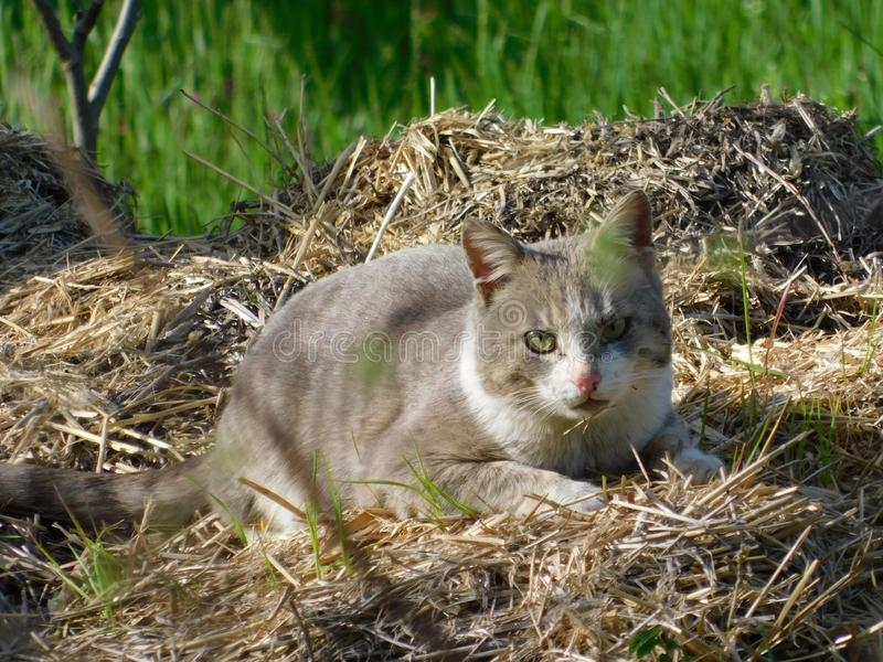 Cat in thatch stock image