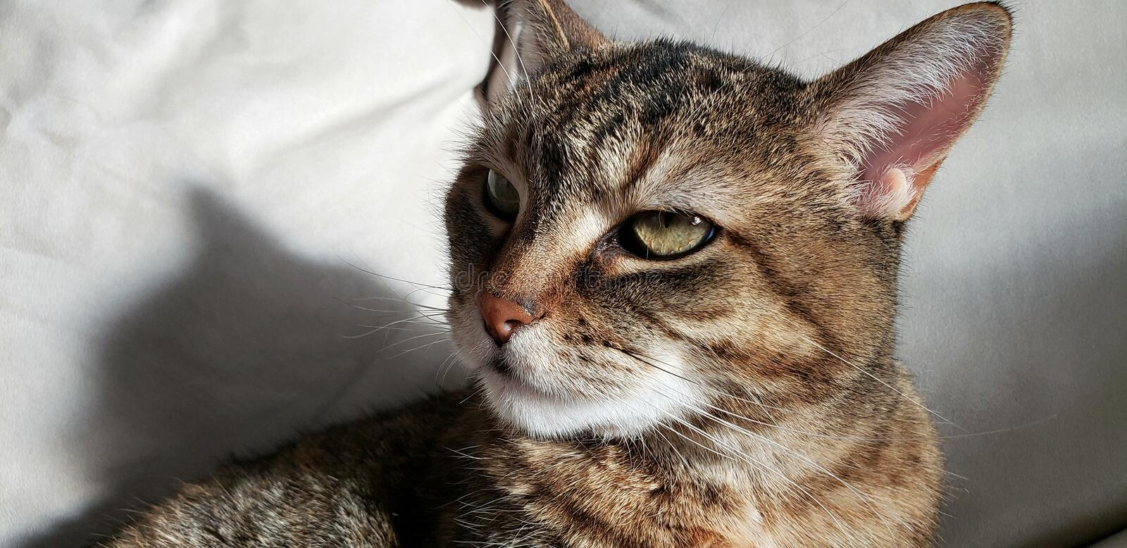 Cat Thinking About Life Shadow Feline stock photography