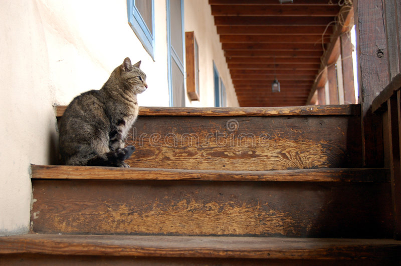 Cat Thoughts. Grey feral cat sitting on the top step of a stairwell stock image