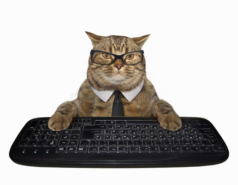 Cat in a tie with computer keyboard. The cat in a tie presses the keys of a computer keyboard. White background stock images