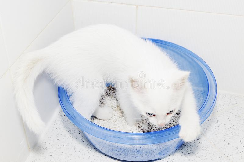 Cat Toilet White Kitten Cuteness imagen de archivo
