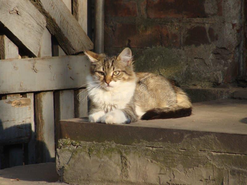 Cat, tomcat royalty free stock photos