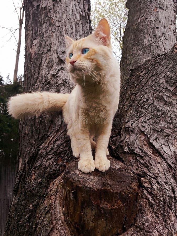 Cat On Top Of ett träd arkivbilder