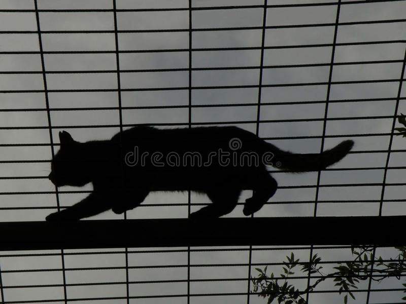 Cat on top of gazebo royalty free stock image
