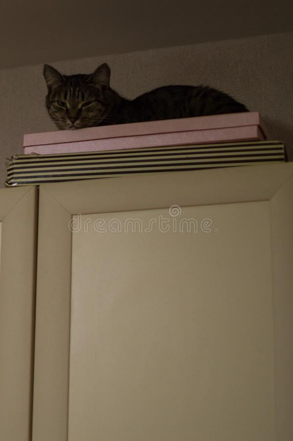 Cat on Top of a Kitchen Cabinet in Astana, Kazakhstan.  stock photography
