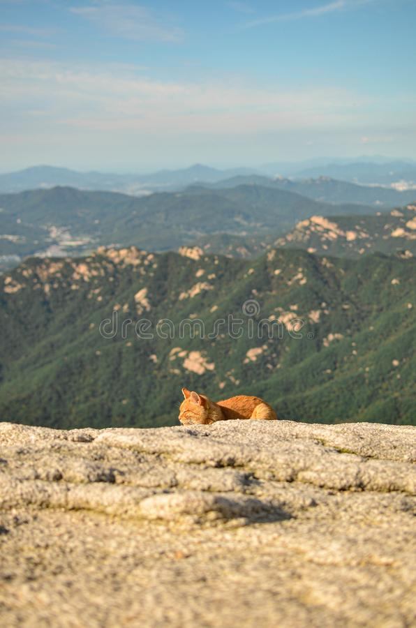 Cat on the top of mountain. Cute little cat on the top of bukhasan peak orange and green stock images