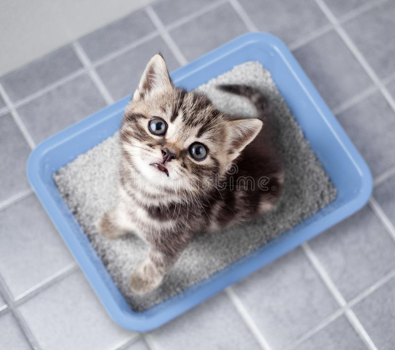 Cat top view sitting in litter box on bathroom floor. Cat top view sitting in litter box bathroom room royalty free stock images