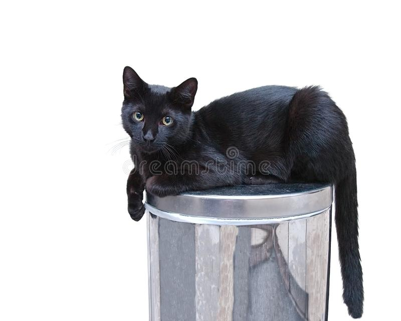 Cat on trash can. Cat sitting on top of a trash can with a curious look in his eyes royalty free stock photography
