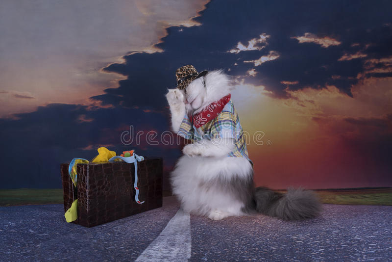 Cat travels at sunset hitchhiking.  royalty free stock image