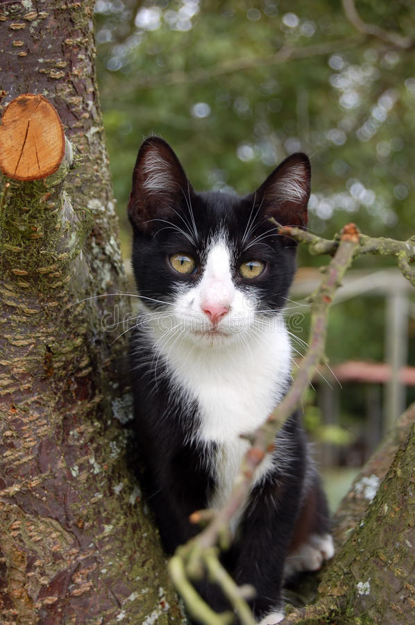 Download Cat In A Tree Stock Photography - Image: 21124712
