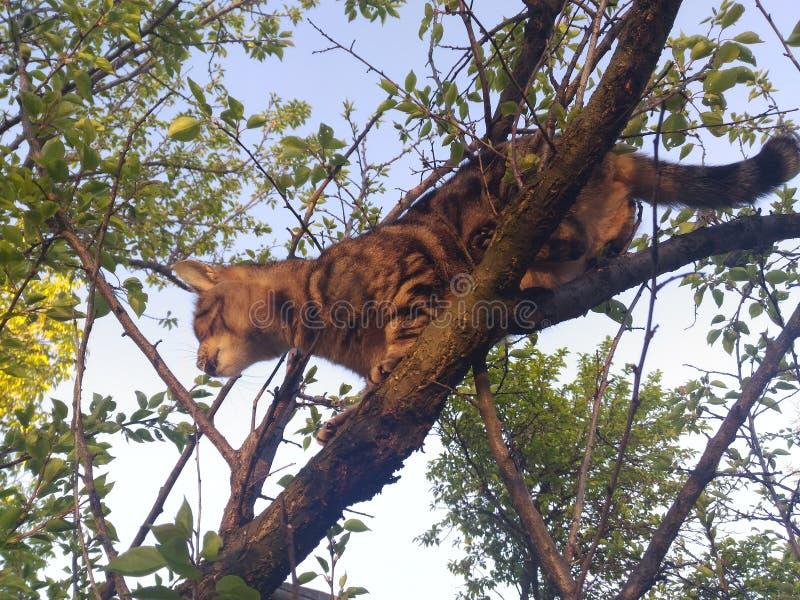 Cat Tree photographie stock
