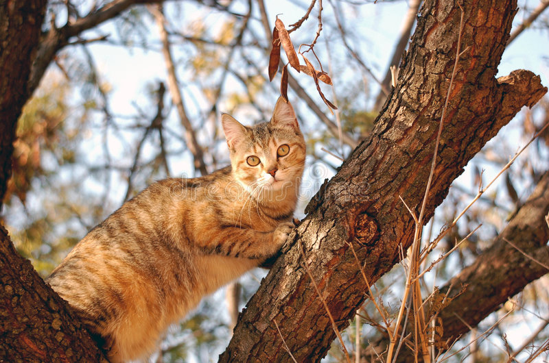 Cat In a Tree. Picture of my domestic feline cat climbing a tree stock photography