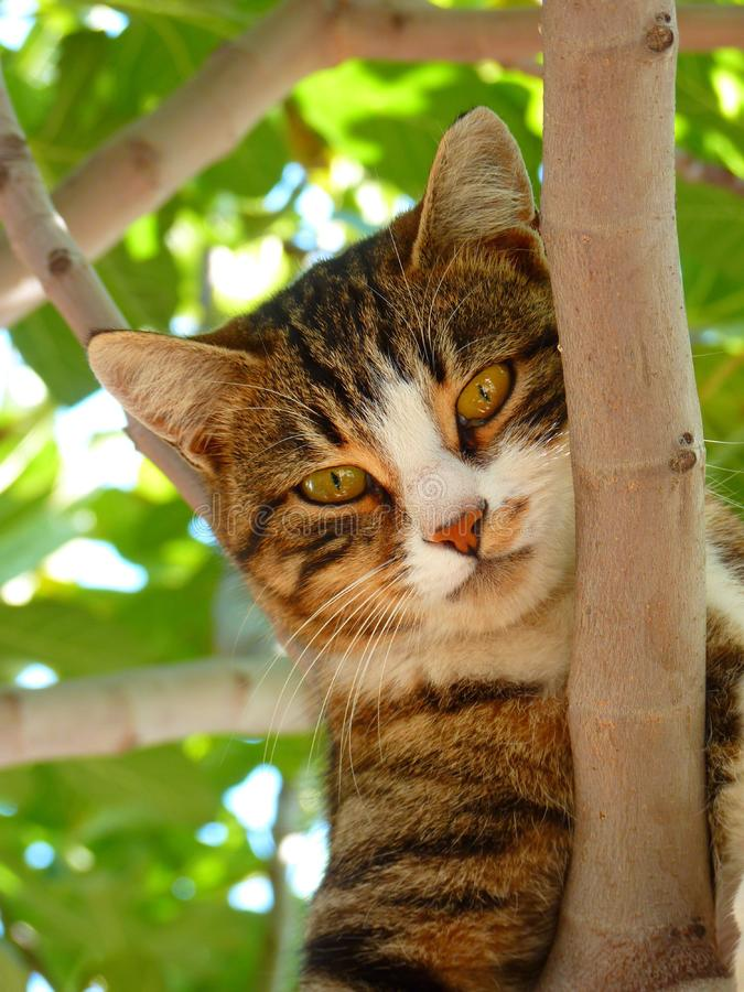 Cat on Tree Branch during Daytime Focus Photography royalty free stock images