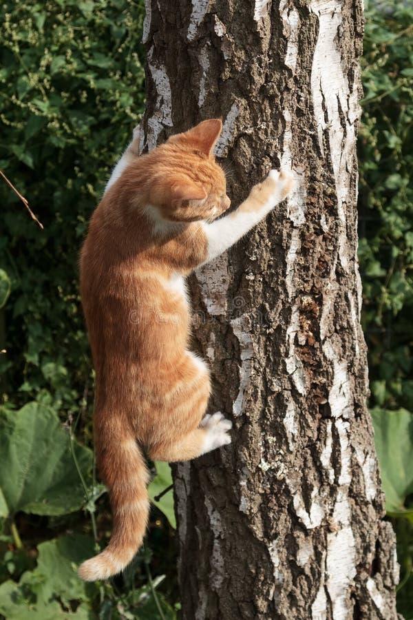 Cat in tree stock photos