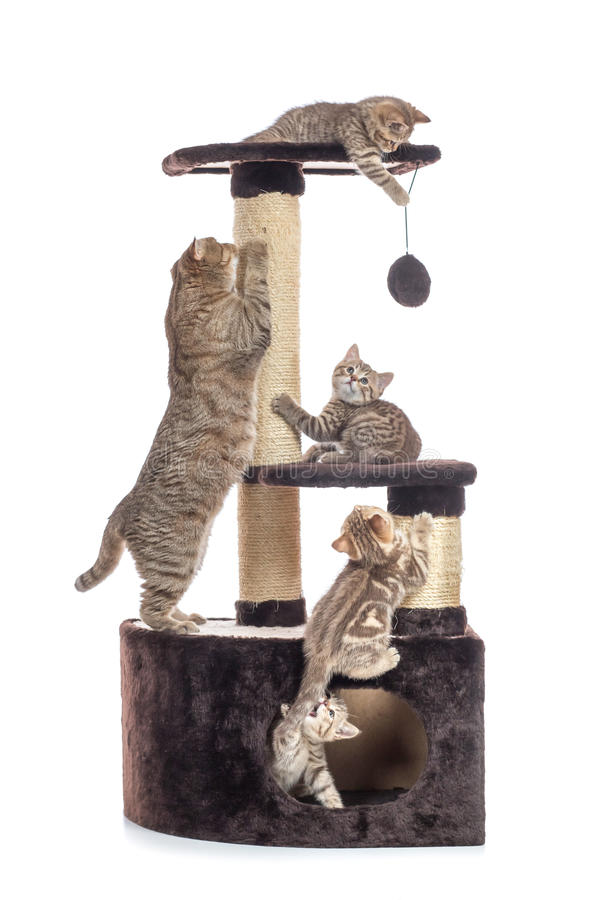 Cat tree scratching post or activity centre. Kittens with mother playing around isolated on white stock image