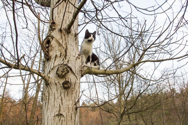 Cat on tree royalty free stock photo