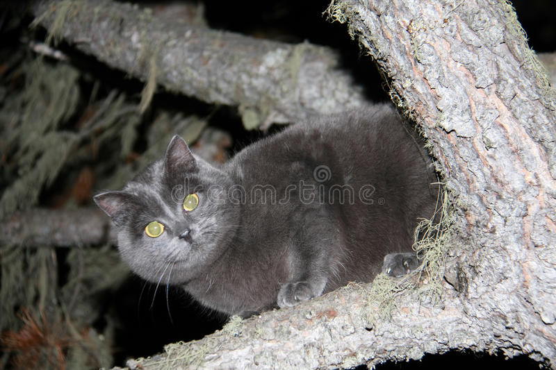Cat on a tree. Cat sitting on eating at night royalty free stock photography