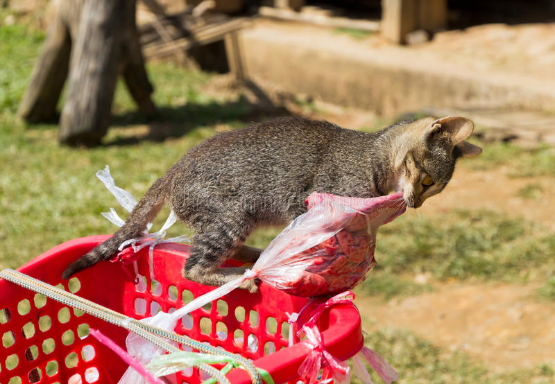 Download Cat tries to steal meat stock photo. Image of basket - 31173032