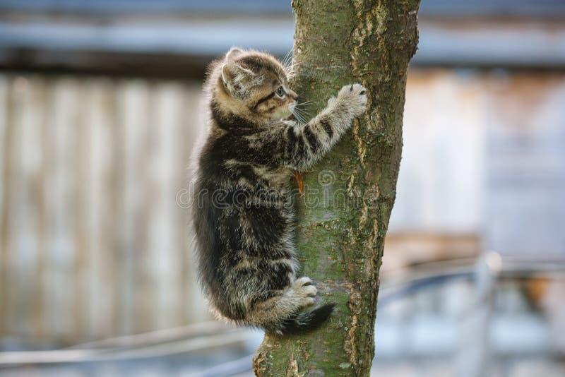 Cat trying to climb a tree. Tabby kitten trying to climb a tree stock images