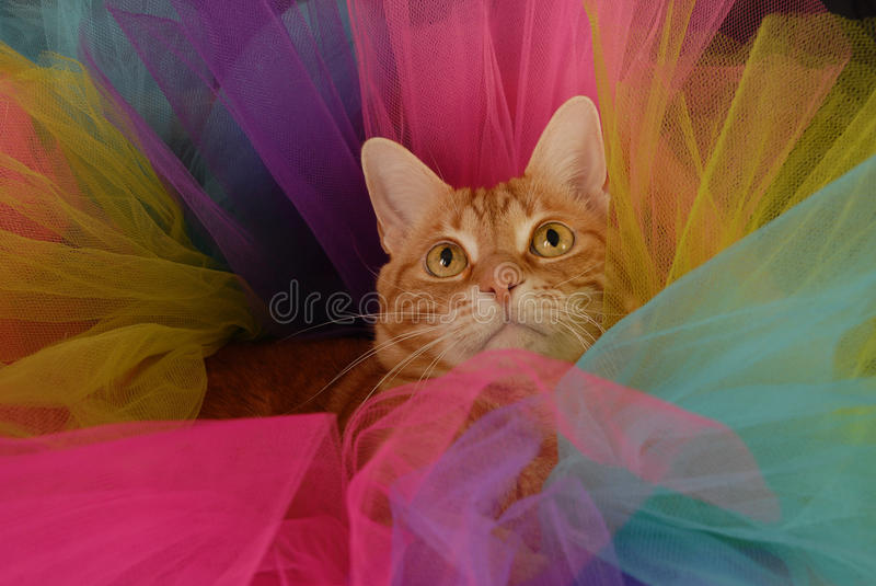 Cat Tutu 3 foto de stock royalty free