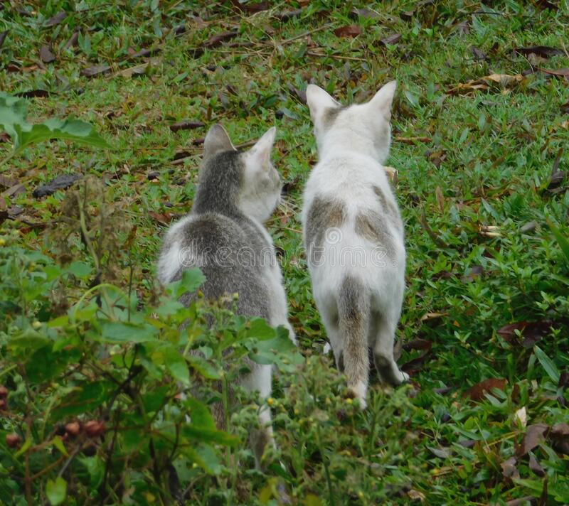 Cat. two cat hunting on grass. In forest, cat love another cat, close up photography, green background stock images