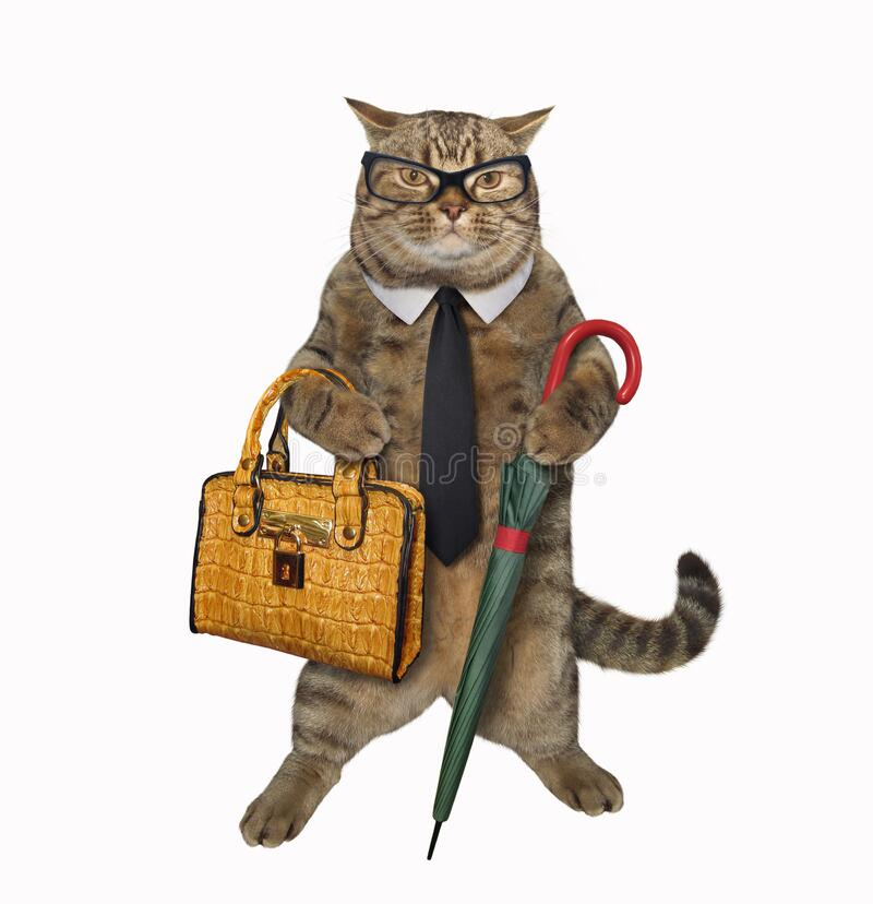 Cat with umbrella and briefcase 3 stock images