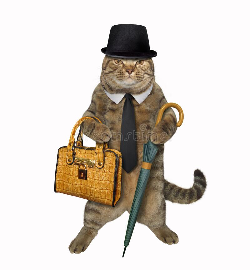 Cat with umbrella and briefcase 2 royalty free stock photography