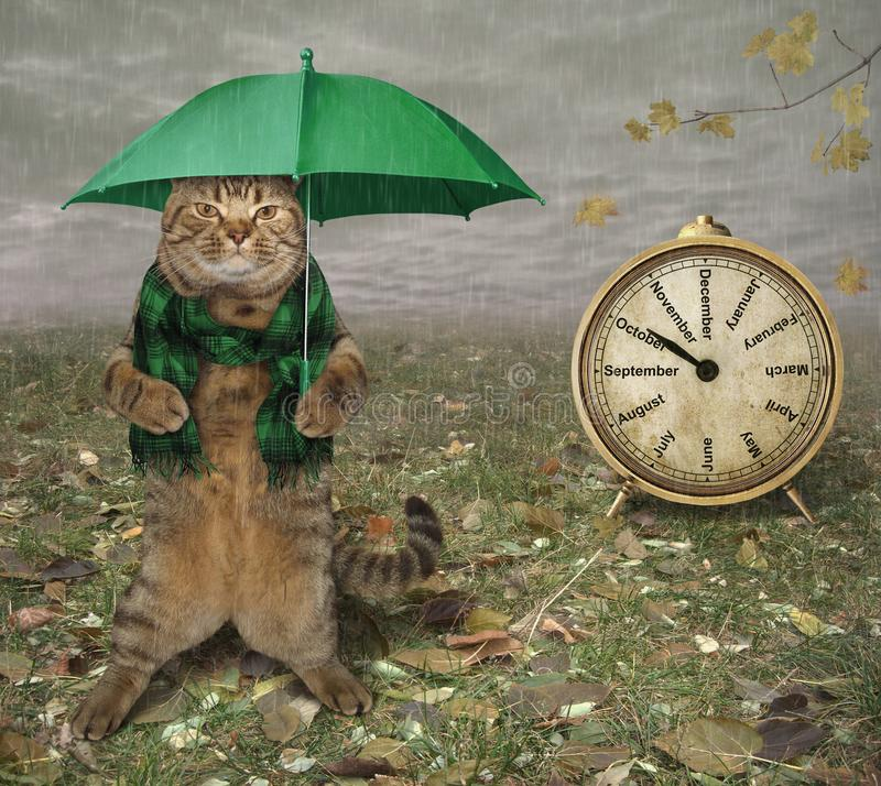 Cat with umbrella and clock stock photography