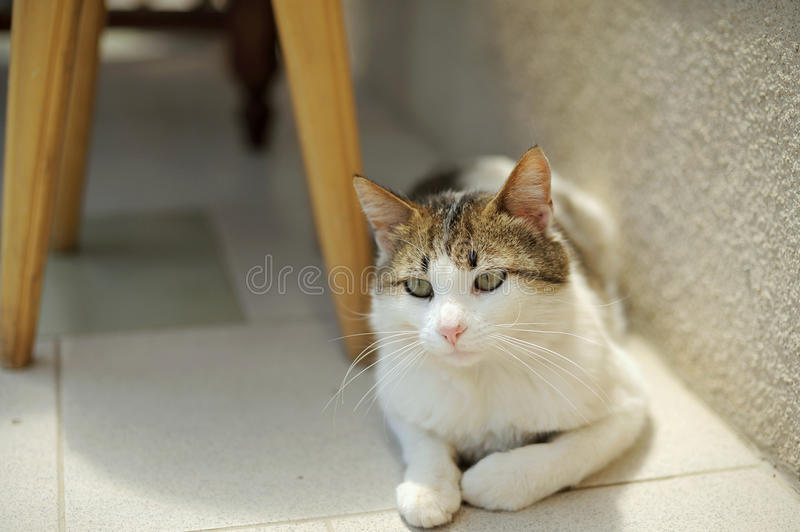 Download Cat under Chair stock image. Image of house, comfortable - 30498149