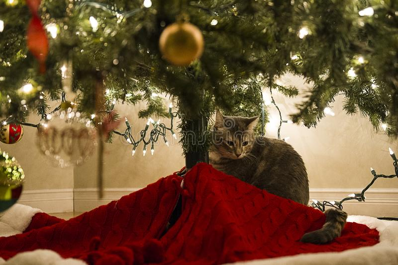 Cat under Christmas Tree stock photography