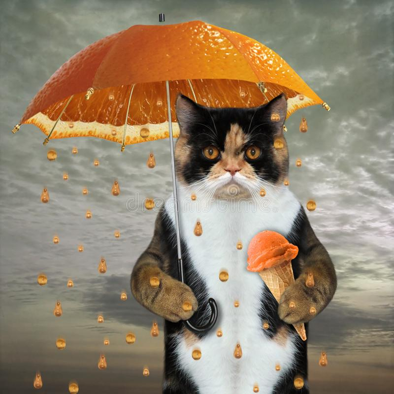 Cat under orange umbrella royalty free stock photos