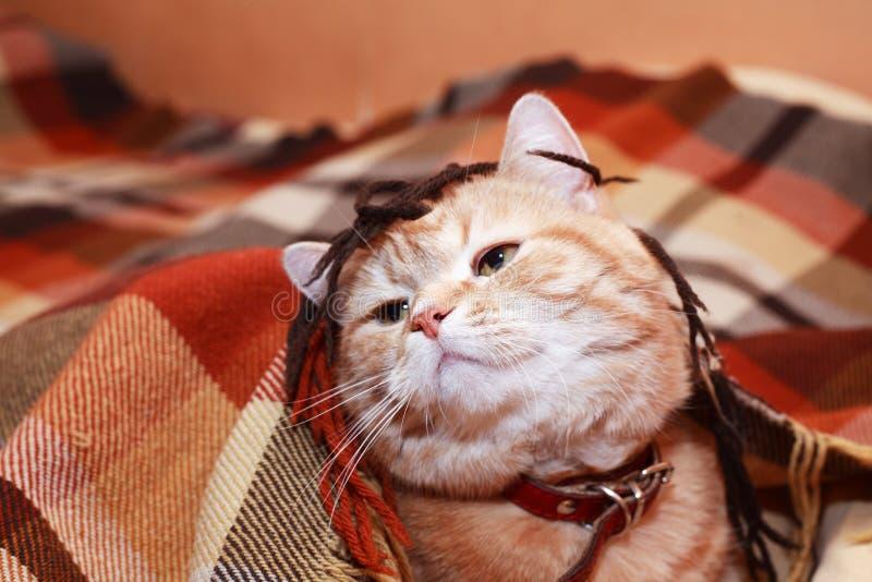 Cat Under Plaid imagen de archivo