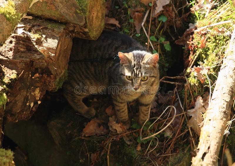 Cat under wooden bridge royalty free stock photos