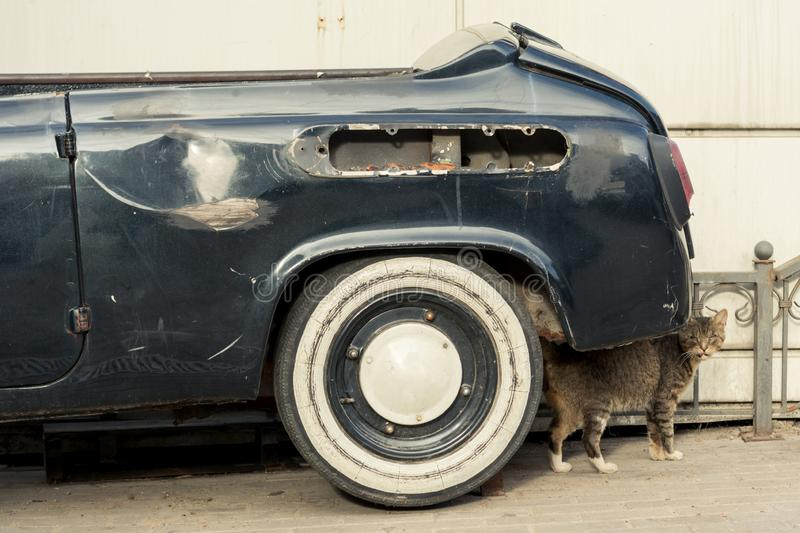 A cat with an unfriendly facial expression stands under the back of a black, old, scratched and rusty car left in the city. A cat with an unfriendly facial stock image