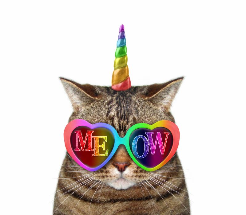 Cat unicorn wears meow sunglasses 3. The cat unicorn wears color sunglasses with inscription meow. White background. Isolated royalty free stock photo