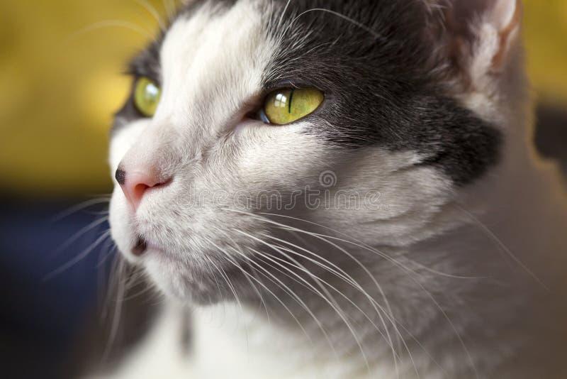Cat Up Close blanca fotos de archivo