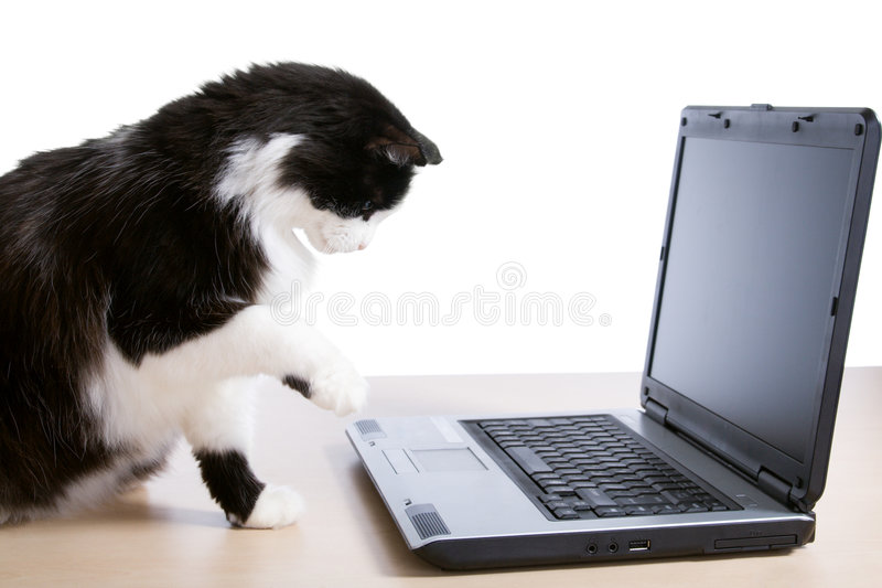 Cat uses a laptop. The cat uses a laptop computer