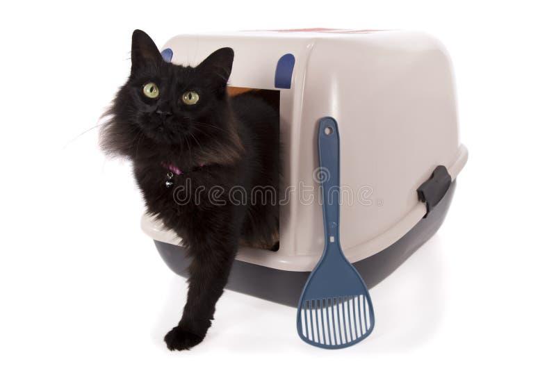 Cat using a closed litter box stock photos