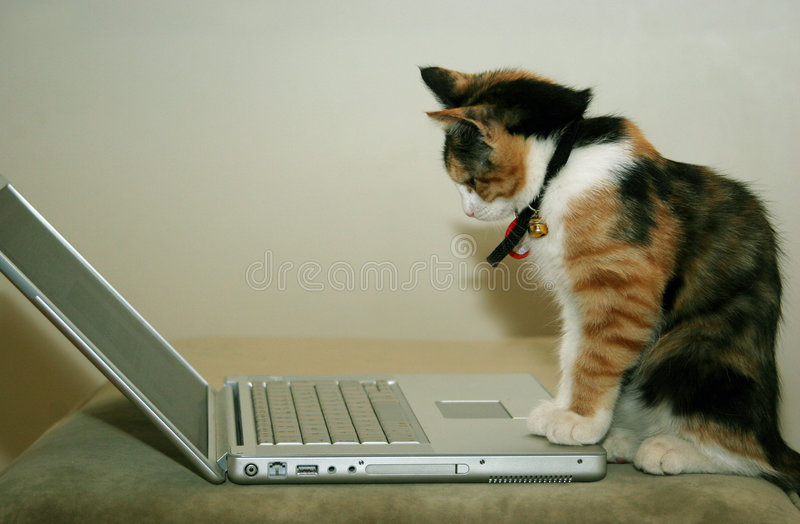 Cat using the computer stock photos