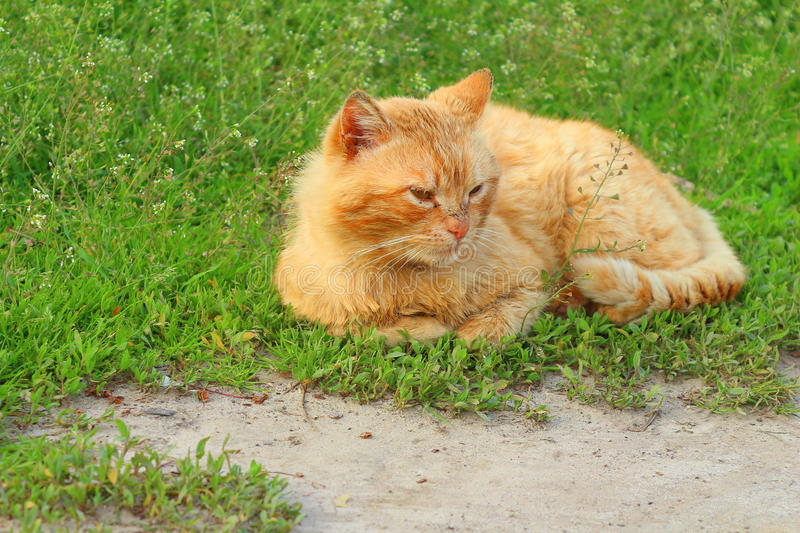Cat on vacation. royalty free stock photo