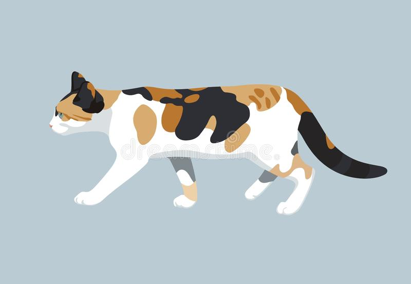 Cat vector color illustration kitty flat design. Cat vector illustration of colorful walking domestic kitty flat design stock illustration