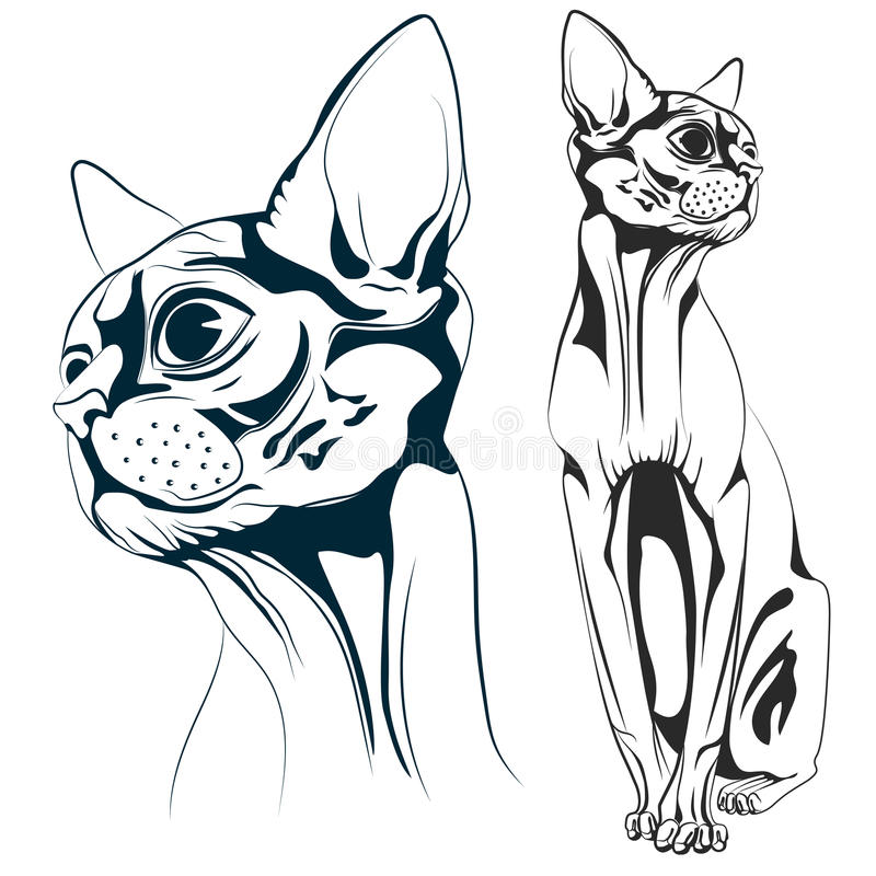 Cat vector. Monochrome bald cat, a set of two objects the head of a cat and the cat entirely. Vector illustrations stock illustration