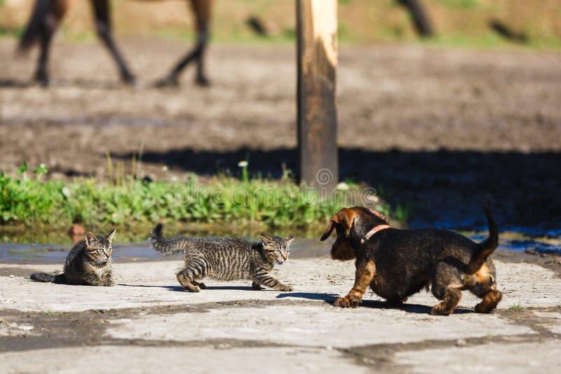 Cat Versus Dog stock afbeeldingen