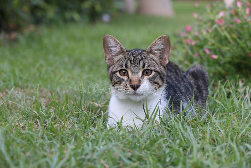 Cat very attentive stock photo