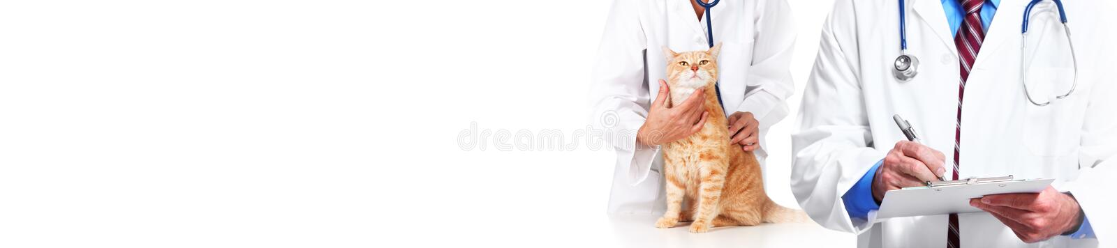 Cat and veterinarian doctor stock image