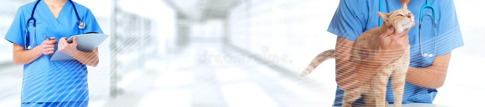 Cat and veterinarian doctor. Veterinary physician doctor with stethoscope checking cat health royalty free stock photo