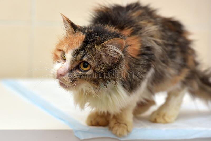 Cat Veterinarians imagens de stock royalty free