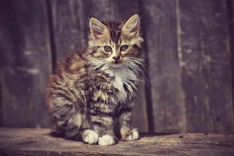 Cat Village lizenzfreies stockfoto